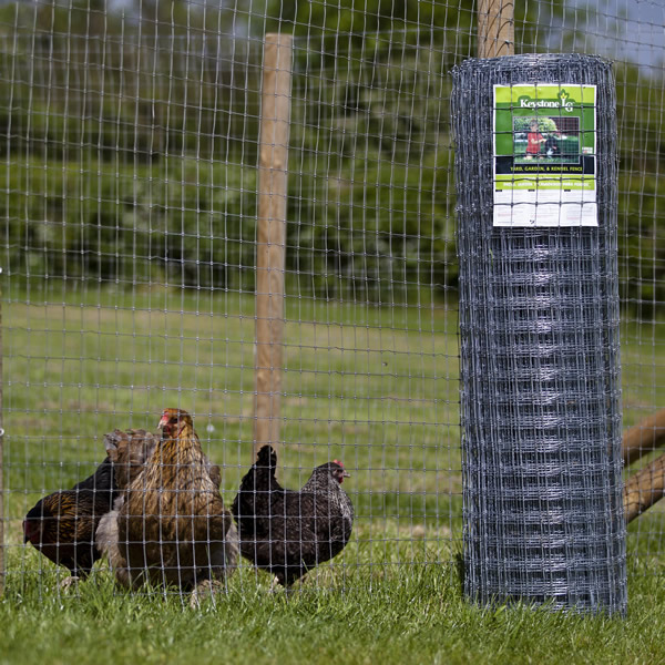 Chicken And Poultry Fence Chicken Fencing Range From The